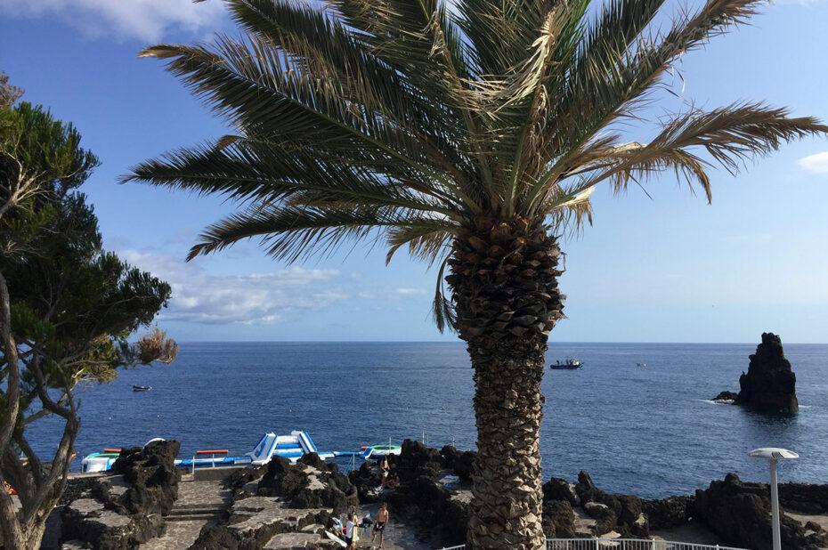 Palmier face à l'océan