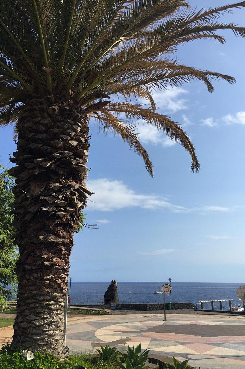 Palmier sur le front de mer