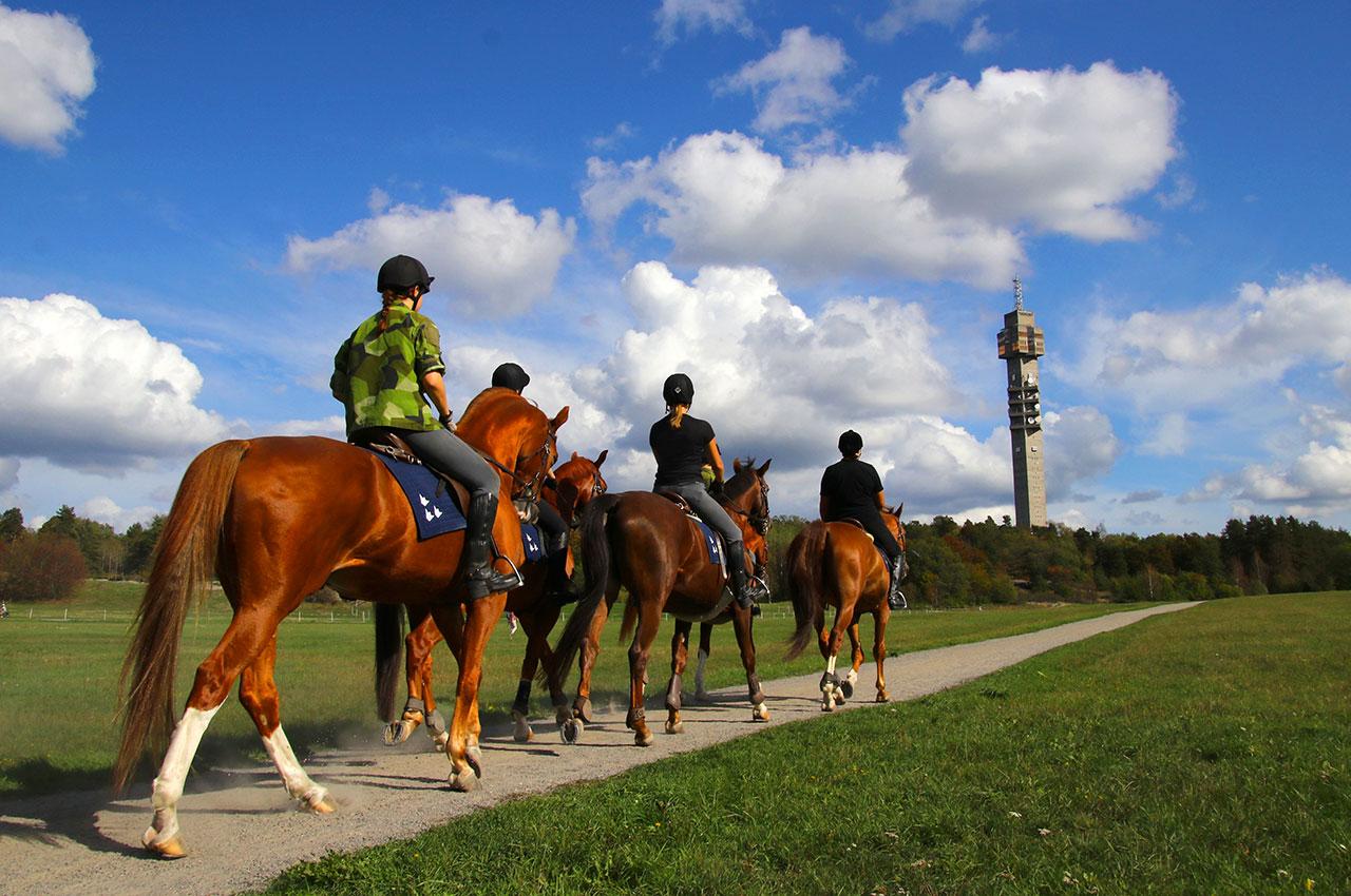 Des cavaliers à Ladugårdsgärdet